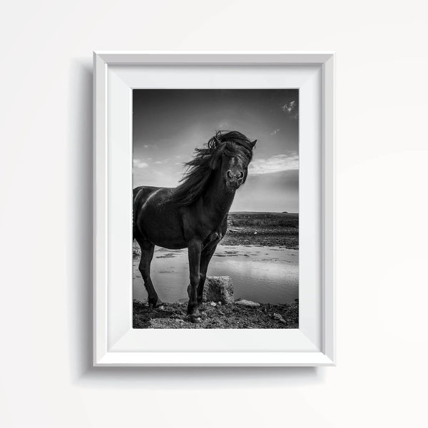 Wild Horse from Irland